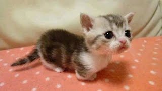 OMG So Cute Cats ♥ Best Funny Cat Videos 2020 #3
