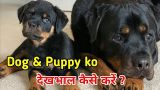 New Puppy ko kaise rakhe / How To Take Care Of New Puppy