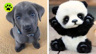 Cute baby animals Videos Compilation cutest moment of the animals   Cutest Puppies #5