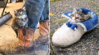 Cute Kittens Doing Funny Things 2021 🐱 #27 Cutest Cats 🐱