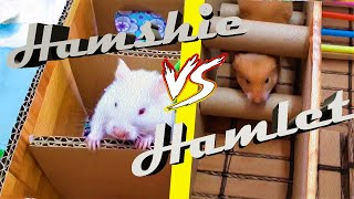 HAMSTER MAZE👉my funny hamsters in the 6 level maze!