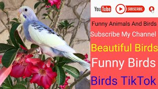 funny animals and birds compilation/funny animals and birds/bird side of compilation/birds funny