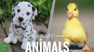 #Animals #Cute #Dogs Cute baby animals Videos Compilation cutest moment of the animals.cute animals6