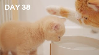 Mom Teaches Kittens Drinking Water For First Time – Day 38 @ Baby Kittens Day 1 to Day 100 Vlogs