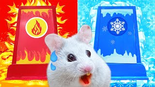 HOT and COLD Challenge: Pet Hamster Maze Obstacle Traps Lava and Icy – CARTOON Life Of Pets Hamham