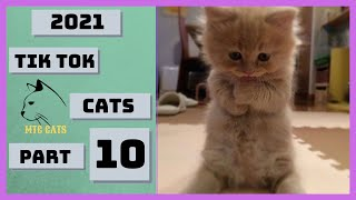 😍 Cats SOO Cute 😻 Cute Cats Videos Part 10 🐯 Awesome Pet – Animals and Cats Life #shorts