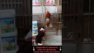 CUTE ANIMALS 🐕 Funny Dogs #Shorts