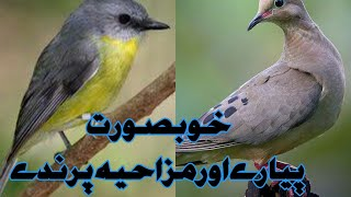 Beautiful and lovely birds | funny birds | pets and birds | funny content