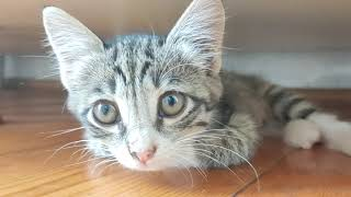 The Little Kitten is curious about everything and watches quietly. 😺🐈😘