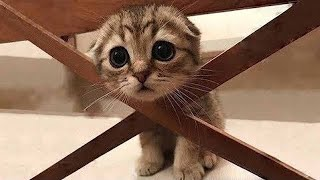 OMG So Cute Cats ♥ Best Funny Cat Videos 2021 #96