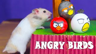 Funny Hamster In Angry Birds Game   DIY Hamster