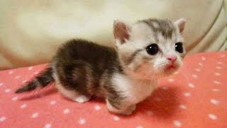 OMG So Cute Cats ♥ Best Funny Cat Videos 2021 #95
