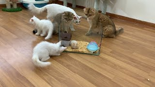 Cute cats react to funny hamster