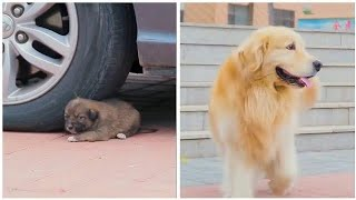 CUTE DOGS 🐕 Smart dog, Funny dogs, Cute puppies & Dogs training compilation video, Shorts #Shorts