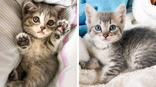 Cute Kittens Doing Funny Things, Cutest kittens in the worlds 2021 🐱Cutest Cats #1 🐱