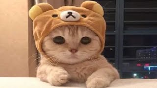 Funny Cats – Aww Cats – Cute Cats Videos Compilation – 8