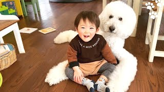 Poodle Dog and Baby are Best Friends – Cute Dogs Love Babies Compilation   Standard Poodle