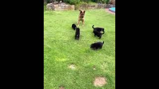#Shorts Best Funny Dogs Videos | Dogs Are Best Friends Of Human
