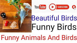 funny animals and birds compilation/funny animals and birds/bird side of compilation/funny birds