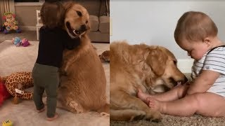 Golden Retriever And Kids Are Best Friends – Cute Dogs Love Babies Compilation !