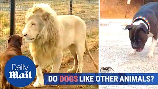 Dogs meet cats, lions and elephants: What do these cute dogs think of other animals?
