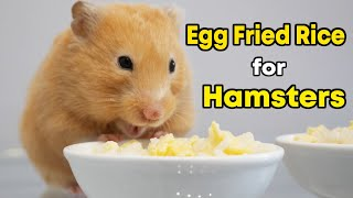 Egg Fried Rice for Cute Hamsters