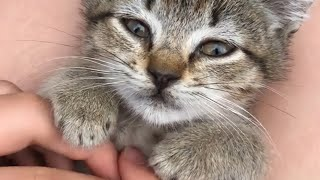 Cute and Funny Cat Videos to Make Your Sunday!😸2021| YUFUS