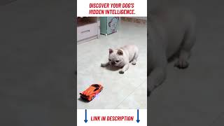 Cutest Lands   Animals Doing Funny Thing   Funny And Cute Dogs & Cats #shorts 🐶🐱🐕