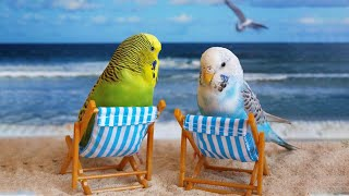 Funny Parrots Videos Compilation cute moment of the animals – Cutest Parrots #49 – Compilation 2021
