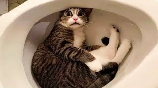 Hilarious Cat Fails 😻 Funny Cats Life 😁 Don't Try To Hold Back Laughter