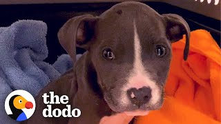 Puppy Abandoned In A Basket Chases Her Rottweiler Sister Now | The Dodo