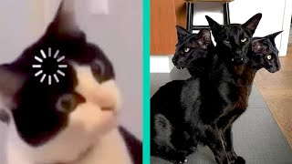 BEST CAT MEMES COMPILATION OF 2020 PART 24 (FUNNY CATS)