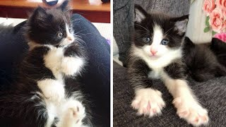Cute Kittens Doing Funny Things, Cutest kittens in the worlds 2021 🐱Cutest Cats #7🐱