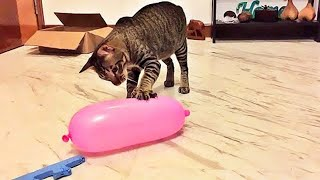 OMG So Cute Cats ♥ Best Funny Cat Videos 2021 #87