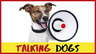 Funny Dogs Talking Like Humans Compilation – Try Not to Laugh #hysterical