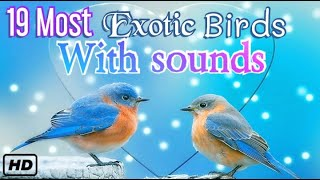 Beautiful birds with Name and sounds | Exotic birds||funny birds,HD,4K Most loves for kids 😊 😍 ❤
