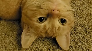 FUNNIEST CATS TO MAKE YOU LAUGH😹 2021-  Hilarious Cats  | YUFUS