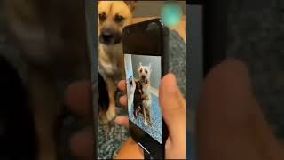 Brother's love  cute dogs  #shorts
