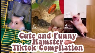 Cute and Funny Hamster Tiktok Compilation