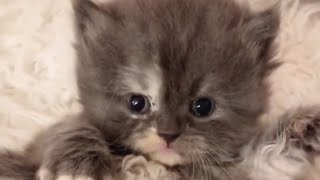 Beautiful Cats 2021😻-Cute and Funny Cat Videos to Keep You Smiling!😹2021| YUFUS