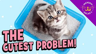 Litter Lessons for Kittens: Where & Where Not To Play