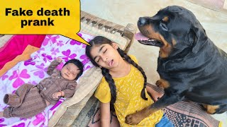 Fake death prank in front of my dog  cute dog videos.