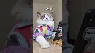 ASMR : Collection of Funny Cat – #Short #Shorts