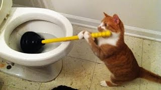 OMG So Cute Cats ♥ Best Funny Cat Videos 2020 #60
