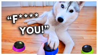 Dog Tries Talking Buttons and Uses Them to SWEAR!