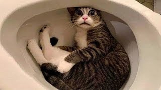 omg so cute cats♥ Funny cats compilation#38 – Cats TV