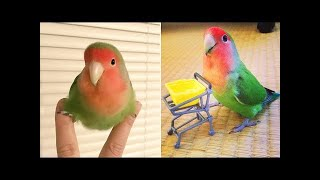Baby Animals 🔴 Funny Parrots and Cute Birds Compilation 2021 #8