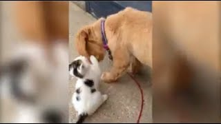 Pure friendship between a puppy and a kitten
