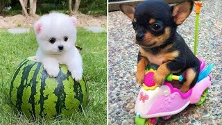 Baby Dogs 🔴 Cute and Funny Dog Videos Compilation #7 | Funny Puppy Videos 2020