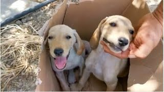 TWO ABANDONED PUPPIES RESCUED – 1st August